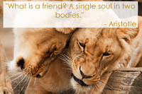 Aristotle Quotation