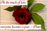 Touch of Love Plato Quotation