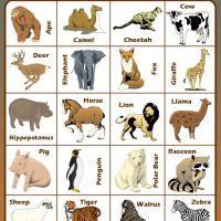 Animal Life Bingo Tiles