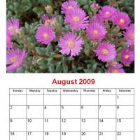 Printable August 2009 Lilac Daisies - Printable Monthly Calendars - Free Printable Calendars