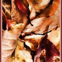 Autumn Leaves Bookmark