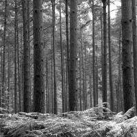 Printable Black And White Woods - Printable Nature Pictures - Free Printable Pictures