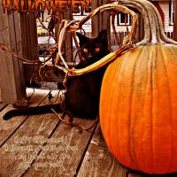 Black Cat and Pumpkin Photo Card