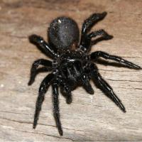 Printable Black Spider - Printable Nature Pictures - Free Printable Pictures