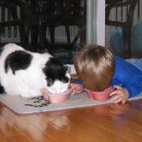Boy and Cat Eating Together