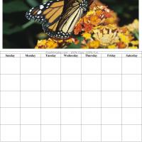 Butterfly Blank Calendar