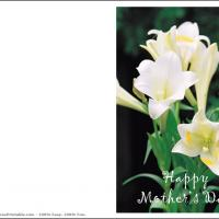 Printable Calla Lily Card - Printable Mothers Day Cards - Free Printable Cards