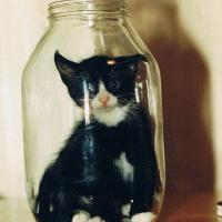 Printable Cat in a Bottle - Printable Pics - Free Printable Pictures