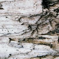 Close-Up Of Driftwood