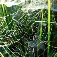Printable Dew Covered Spider Web - Printable Photos - Free Printable Pictures