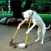 Printable Dog Cleaning Poop - Printable Pics - Free Printable Pictures