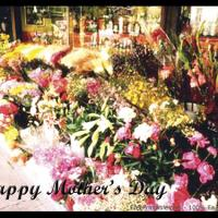 Flower Shop Postcard