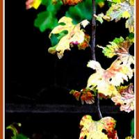 Printable Hanging Autumn Leaves - Printable Bookmarks - Free Printable Crafts