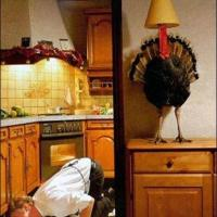 Hidden Turkey