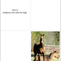 Printable Horse Birthday Cards - Printable Birthday Cards - Free Printable Cards