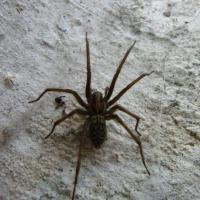 Printable House Spider - Printable Nature Pictures - Free Printable Pictures