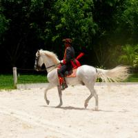 Printable Horse Show - Printable Pictures Of People - Free Printable Pictures
