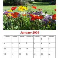 Printable January 2009 Colorful Flowers In The Garden Calendar - Printable Monthly Calendars - Free Printable Calendars