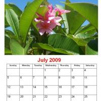 Printable July 2009 Pink Flower Calendar - Printable Monthly Calendars - Free Printable Calendars
