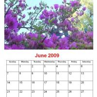 June 2009 Purple Flowers