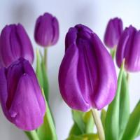 Printable Lilac Tulips - Printable Flower - Free Printable Crafts