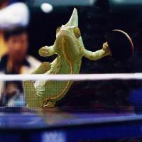 Printable Lizard Table Tennis - Printable Pics - Free Printable Pictures