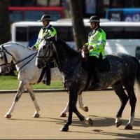 Printable London Police Horses - Printable Nature Pictures - Free Printable Pictures