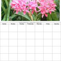 Lovely Pink Flowers Blank Calendar