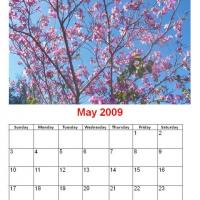 May 2009 Cherry Blossoms Calendar