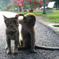 Printable Monkey and Kitten - Printable Pics - Free Printable Pictures