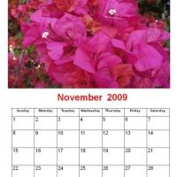 Printable November 2009 Fuchsia Flowers Calendar - Printable Monthly Calendars - Free Printable Calendars