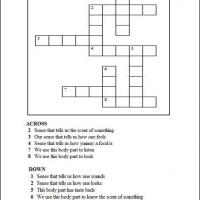 Our Senses Crossword
