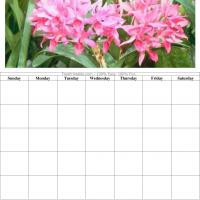 Pink Flower Blank Calendar
