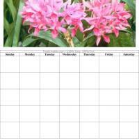 Pink Flower Blank Calendar