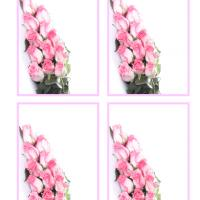 Pink Roses Gift Cards
