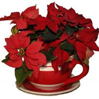 Printable Poinsettia Bouquet - Printable Nature Pictures - Free Printable Pictures