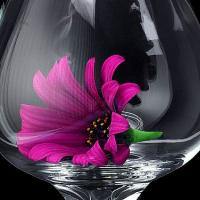 Purple Daisy In A Glass