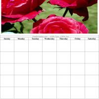 Roses Blank Calendar