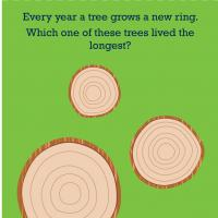 Printable Science & Math: Tree Rings - Printable Preschool Worksheets - Free Printable Worksheets