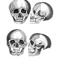 Printable Skulls - Printable Photos - Free Printable Pictures