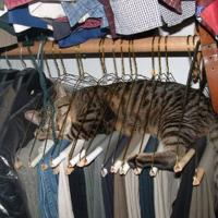 Sleeping Cat in Wardrobe