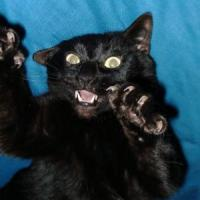 Printable Snarling Black Cat - Printable Pics - Free Printable Pictures