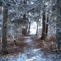 Printable Snow Covered Forest Path - Printable Nature Pictures - Free Printable Pictures
