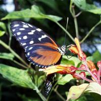 Printable Spotted Butterfly - Printable Nature Pictures - Free Printable Pictures
