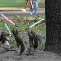 Printable Squirrel Jedis - Printable Pics - Free Printable Pictures