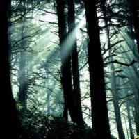 Printable Sun Rays in Forest - Printable Nature Pictures - Free Printable Pictures