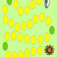 Sunflower Board Game