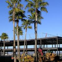 Printable Trees In A Construction Site - Printable Photos - Free Printable Pictures