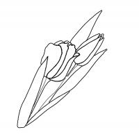 Tulips Stencil