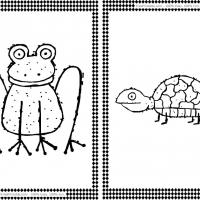 Turtle and Frog Flash Cards